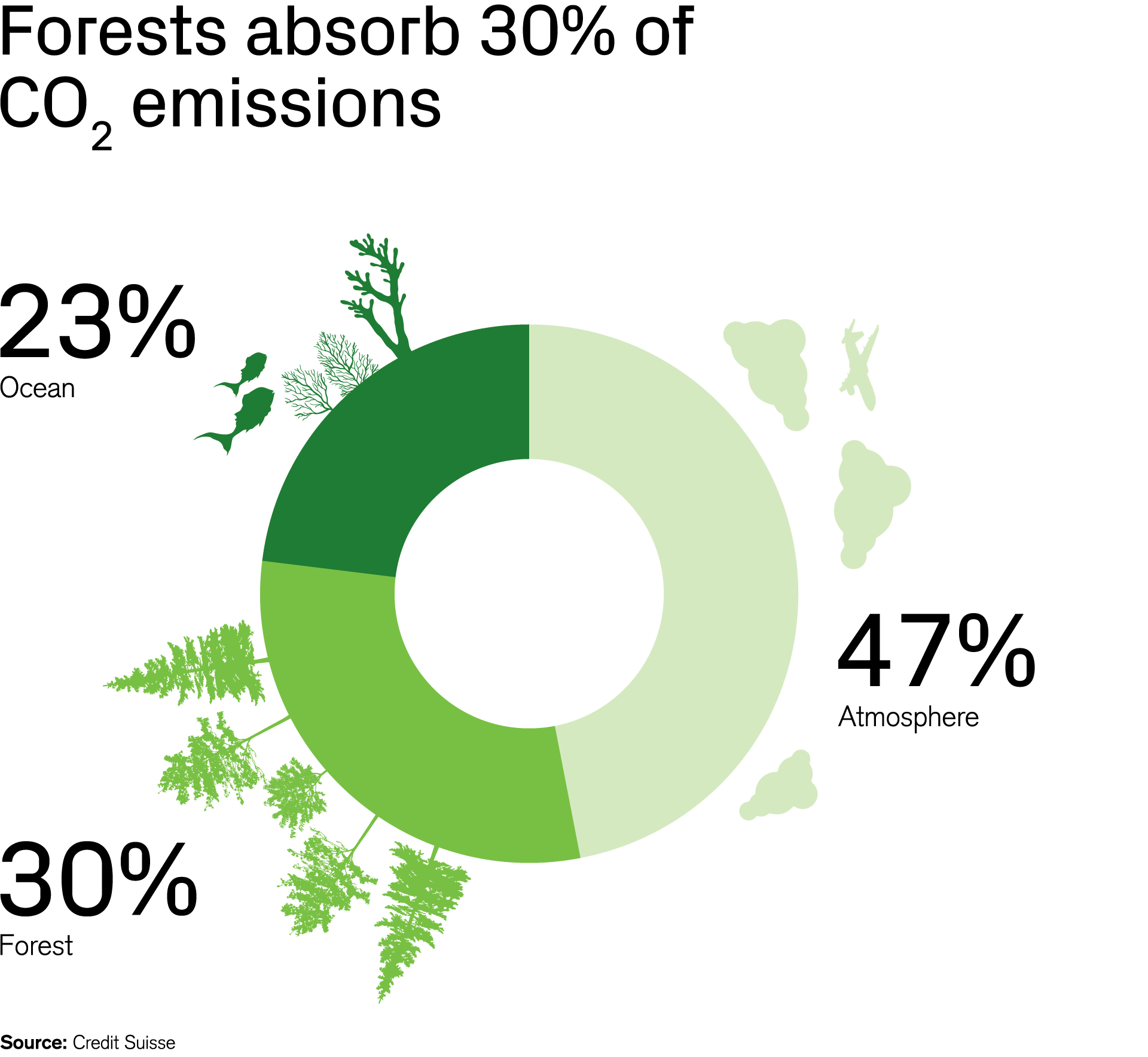 Forests absorb 30% of CO2 emissions