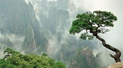 A tree on the edge of a cliff with cloudy weather
